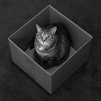 a box for every cat de kevin steele