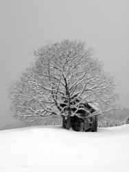 Winter wonderland de RSchuetz.de